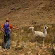 llama2 : on peut constater, ici, ma communication intuitive avec ces sales bêtes